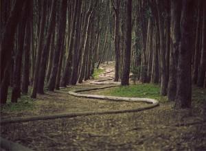 「人生前向き」 遠回りでも回り道でも前を向いて生きる