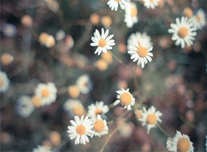 禅に学ぶ生きる力 豊かに暮らす9の言葉