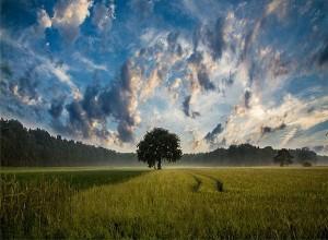前向きな言葉が今あるものに目を向ける 幸せは求めるほどに遠ざかる