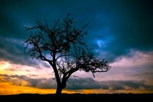 諦めるとは「明らめる」 自分にとって大切なものを知ること