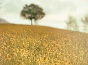 飄々と生きる 何物にも囚われず、自由で柔軟な心でいる