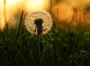 何も考えない豊かな時間 静かに自分の心と向き合う