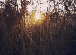 楽に生きたいなら弱さを見せること 人生を笑顔で楽しもう