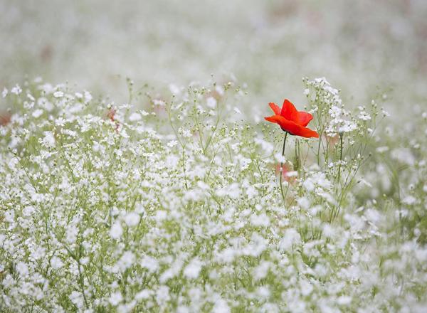 人生を変えるために自分を変える あなたの心が人生をつくる